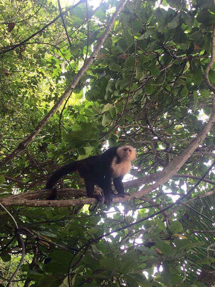 Guest Blog Why You Need To Visit Costa Rica The Jax Blog